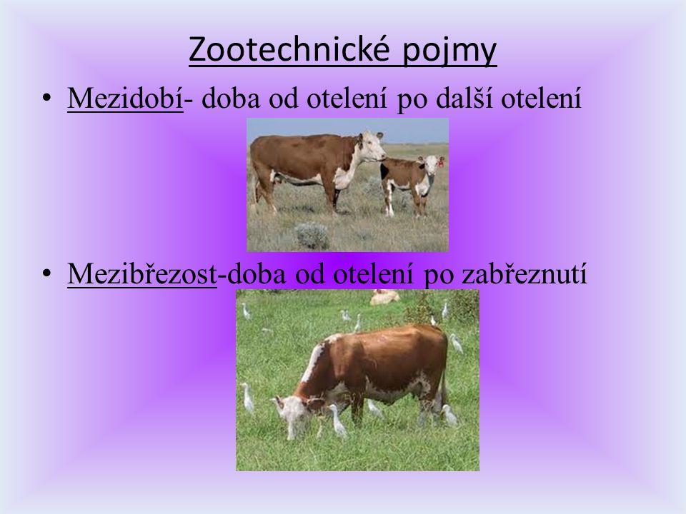 Zootechnické pojmy Mezidobí- doba od otelení po další otelení