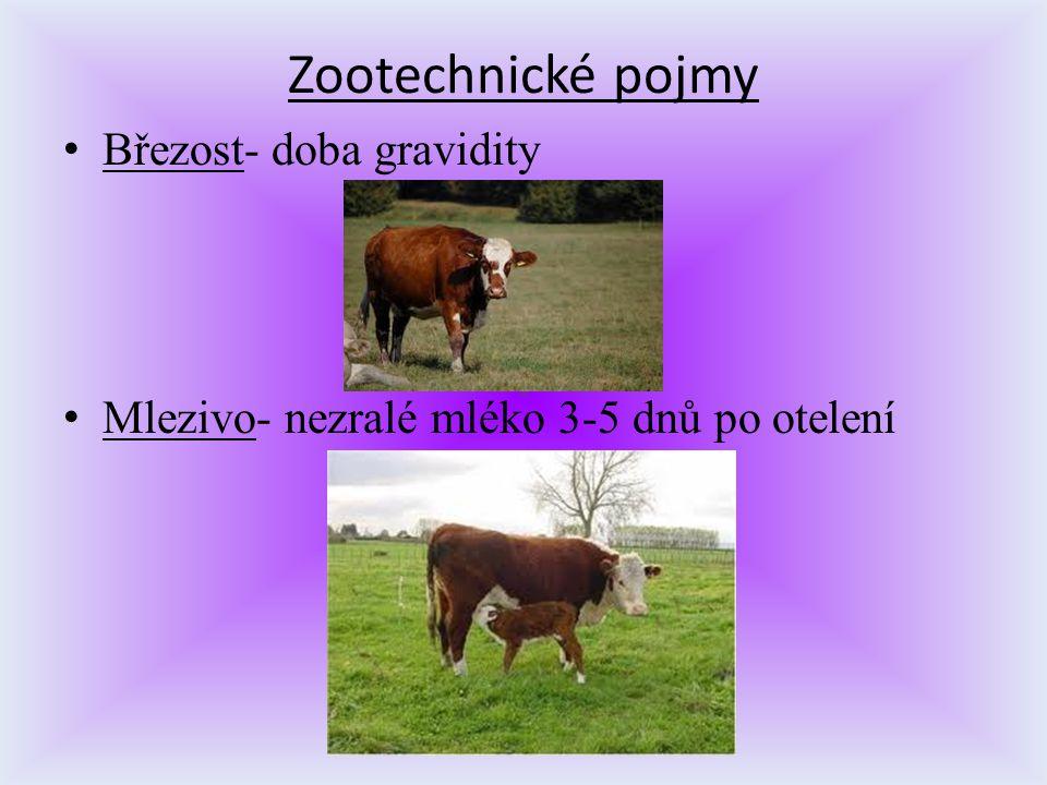 Zootechnické pojmy Březost- doba gravidity