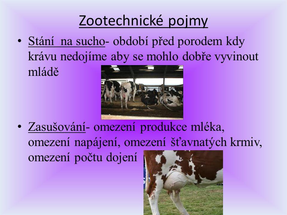 Zootechnické pojmy Stání na sucho- období před porodem kdy krávu nedojíme aby se mohlo dobře vyvinout mládě.