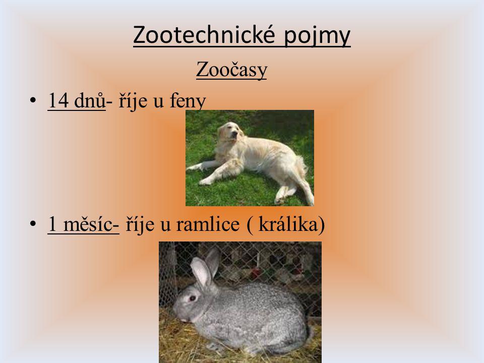 Zootechnické pojmy Zoočasy 14 dnů- říje u feny