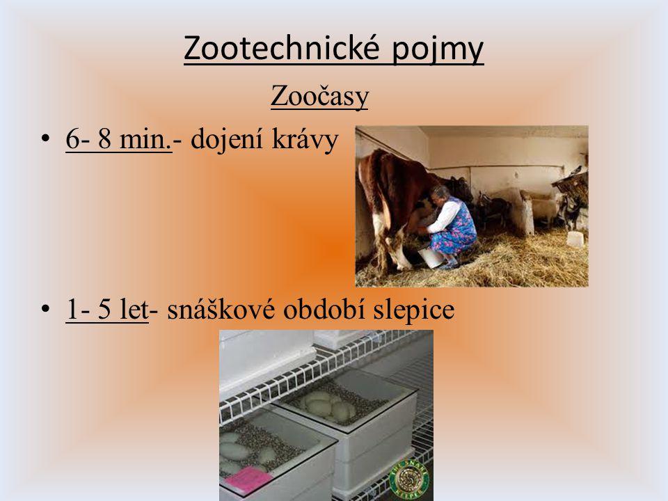 Zootechnické pojmy Zoočasy 6- 8 min.- dojení krávy
