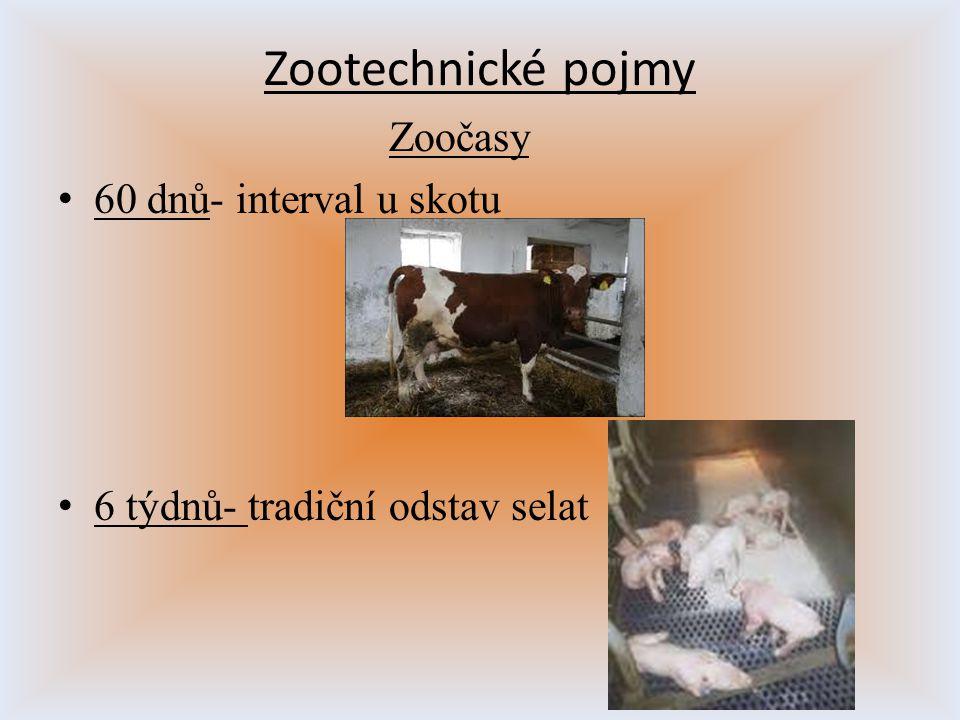 Zootechnické pojmy Zoočasy 60 dnů- interval u skotu