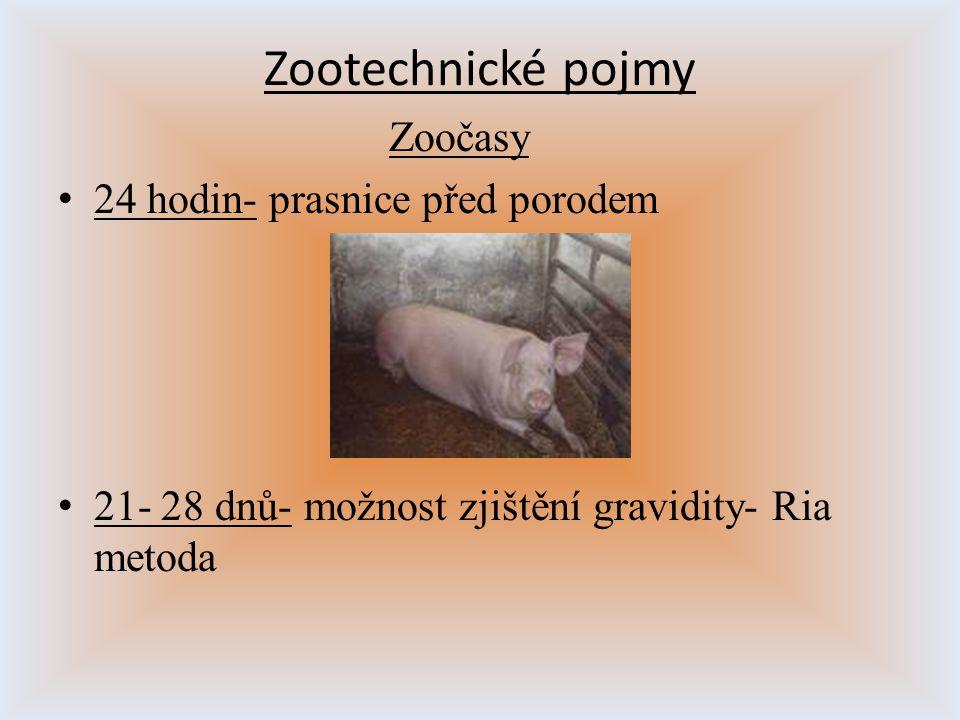 Zootechnické pojmy Zoočasy 24 hodin- prasnice před porodem
