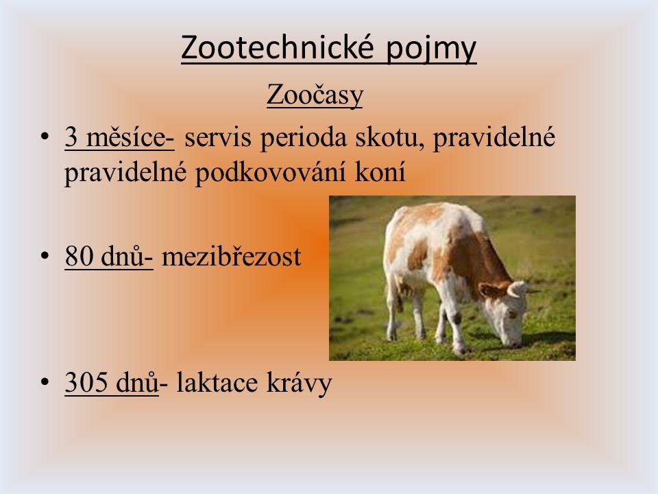 Zootechnické pojmy Zoočasy