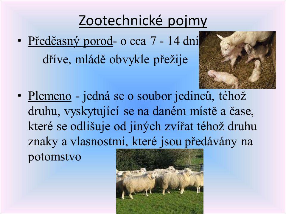 Zootechnické pojmy Předčasný porod- o cca 7 - 14 dní