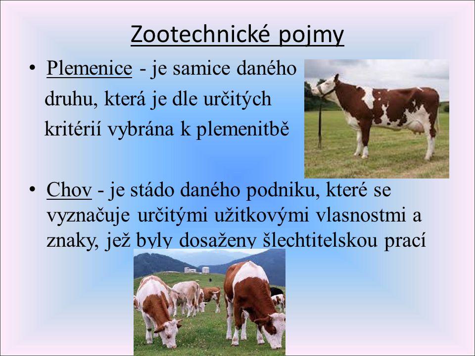 Zootechnické pojmy Plemenice - je samice daného