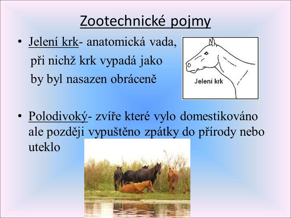 Zootechnické pojmy Jelení krk- anatomická vada,