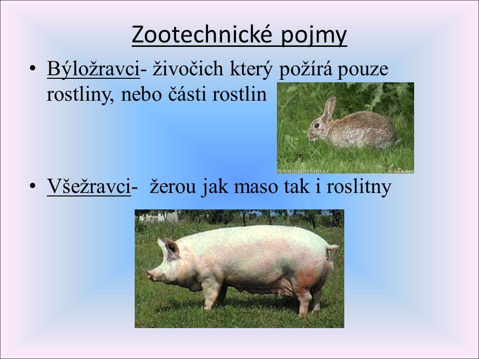 Zootechnické pojmy Býložravci- živočich který požírá pouze rostliny, nebo části rostlin.