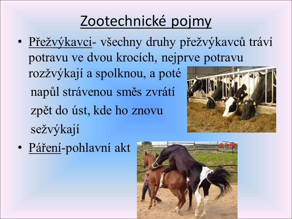 Zootechnické pojmy Přežvýkavci- všechny druhy přežvýkavců tráví potravu ve dvou krocích, nejprve potravu rozžvýkají a spolknou, a poté.