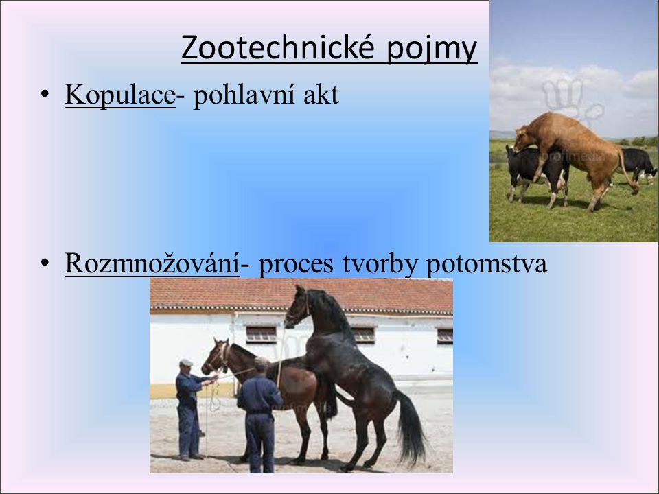 Zootechnické pojmy Kopulace- pohlavní akt