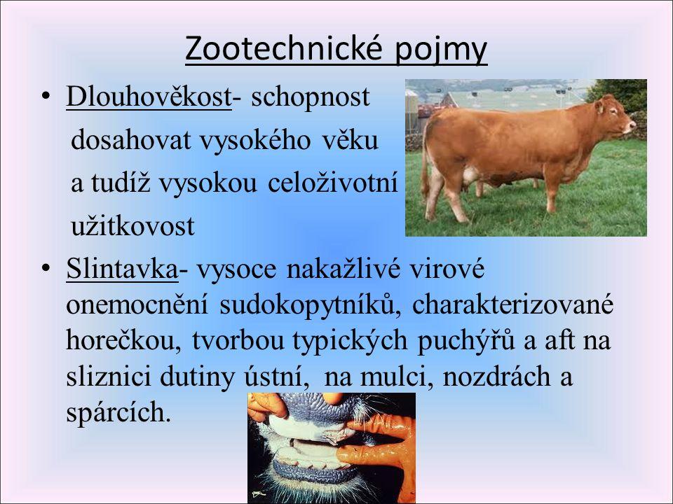 Zootechnické pojmy Dlouhověkost- schopnost dosahovat vysokého věku