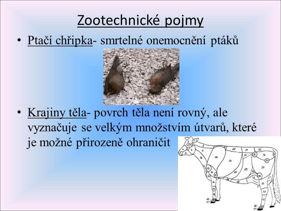 Zootechnické pojmy Ptačí chřipka- smrtelné onemocnění ptáků