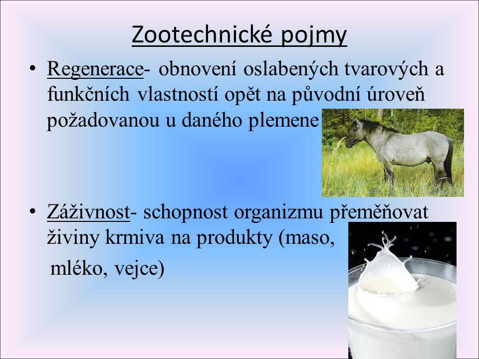 Zootechnické pojmy Regenerace- obnovení oslabených tvarových a funkčních vlastností opět na původní úroveň požadovanou u daného plemene.