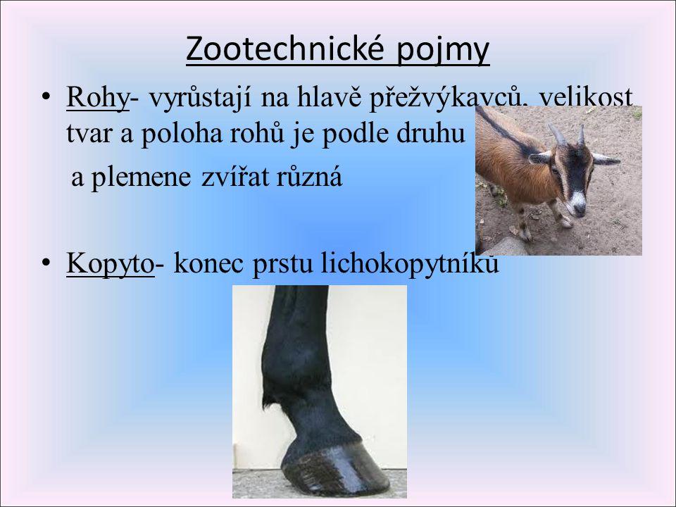 Zootechnické pojmy Rohy- vyrůstají na hlavě přežvýkavců, velikost tvar a poloha rohů je podle druhu.