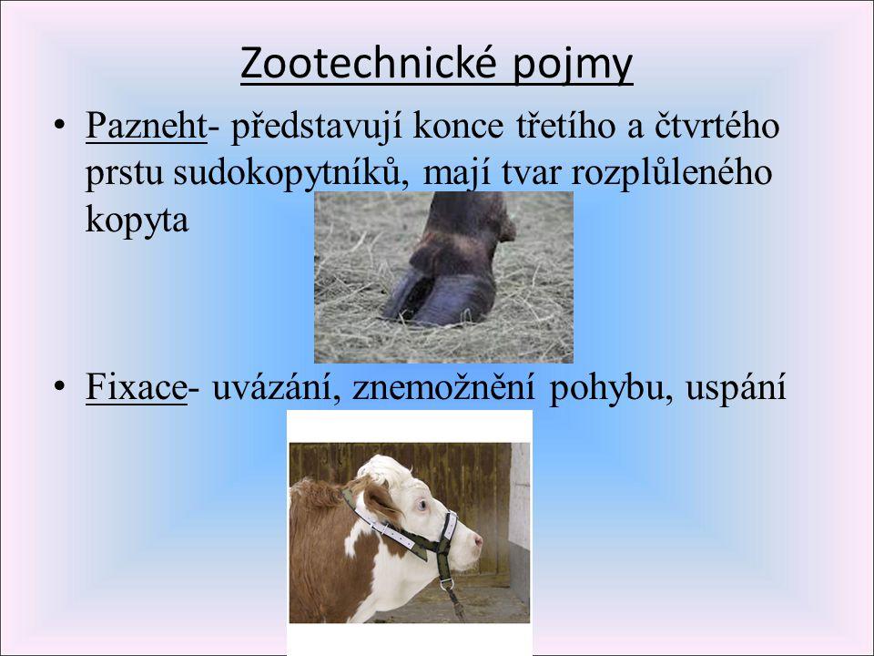 Zootechnické pojmy Pazneht- představují konce třetího a čtvrtého prstu sudokopytníků, mají tvar rozplůleného kopyta.