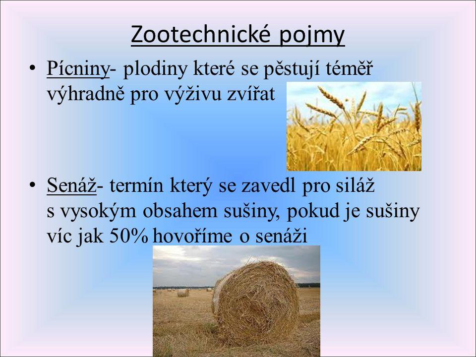 Zootechnické pojmy Pícniny- plodiny které se pěstují téměř výhradně pro výživu zvířat.
