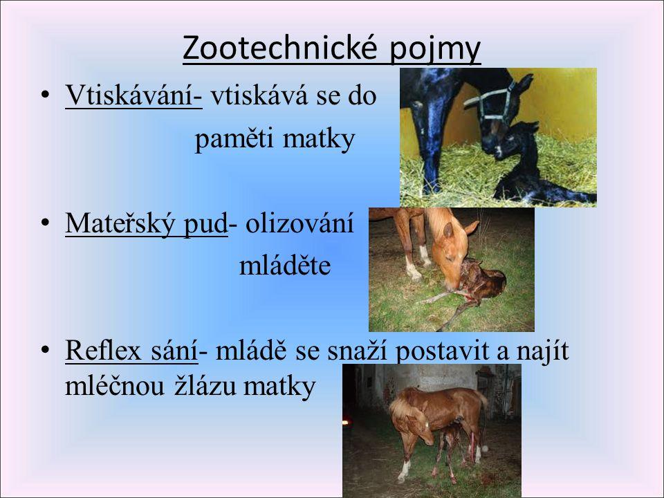 Zootechnické pojmy Vtiskávání- vtiskává se do paměti matky