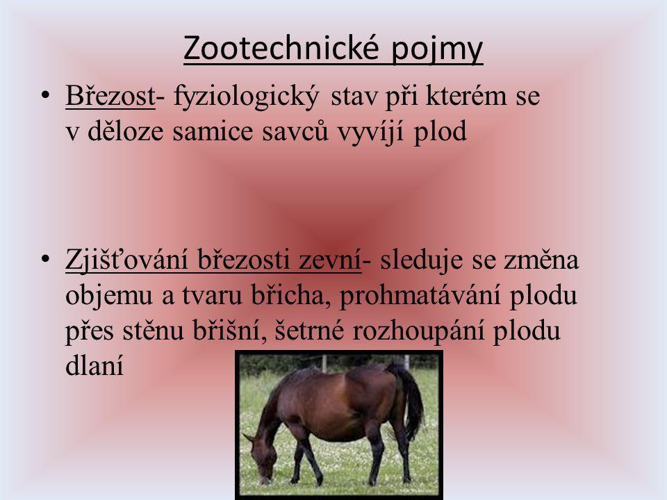 Zootechnické pojmy Březost- fyziologický stav při kterém se v děloze samice savců vyvíjí plod.