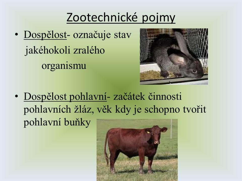 Zootechnické pojmy Dospělost- označuje stav jakéhokoli zralého