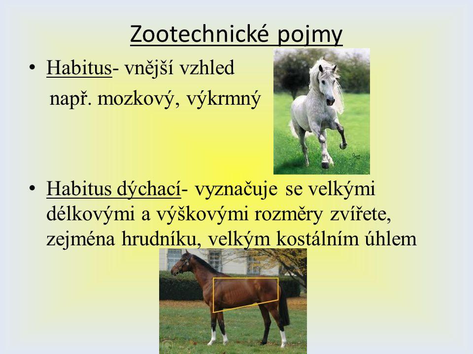 Zootechnické pojmy Habitus- vnější vzhled např. mozkový, výkrmný
