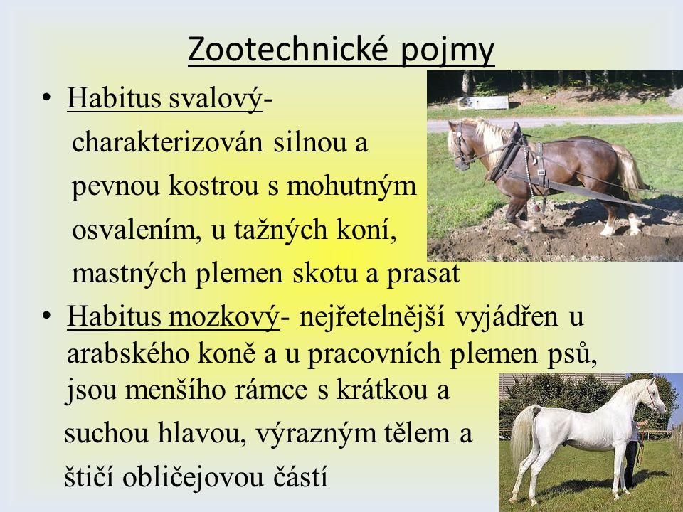 Zootechnické pojmy Habitus svalový- charakterizován silnou a