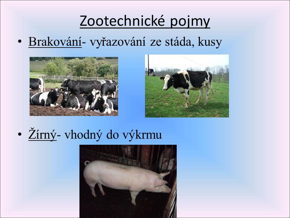 Zootechnické pojmy Brakování- vyřazování ze stáda, kusy