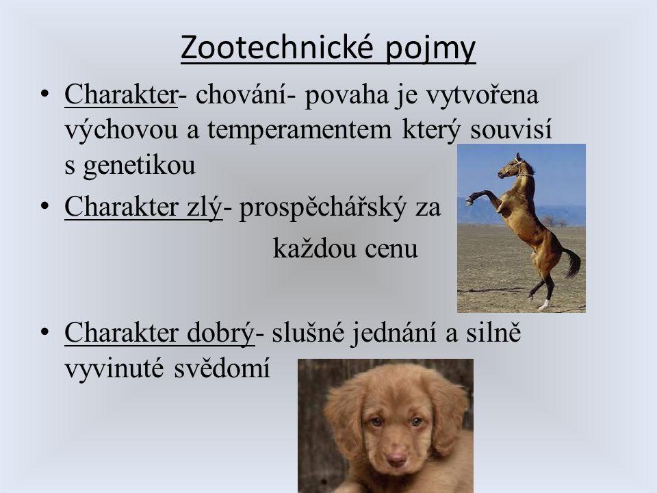 Zootechnické pojmy Charakter- chování- povaha je vytvořena výchovou a temperamentem který souvisí s genetikou.