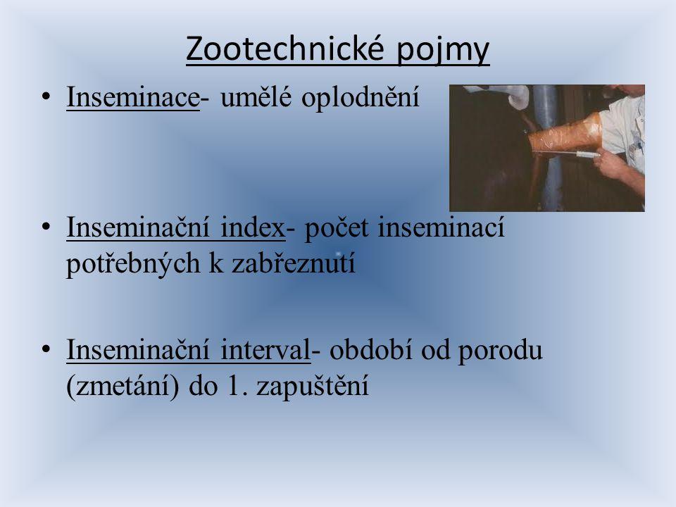 Zootechnické pojmy Inseminace- umělé oplodnění