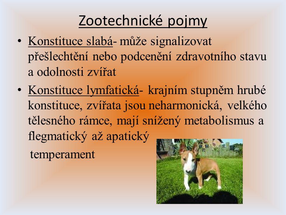 Zootechnické pojmy Konstituce slabá- může signalizovat přešlechtění nebo podcenění zdravotního stavu a odolnosti zvířat.