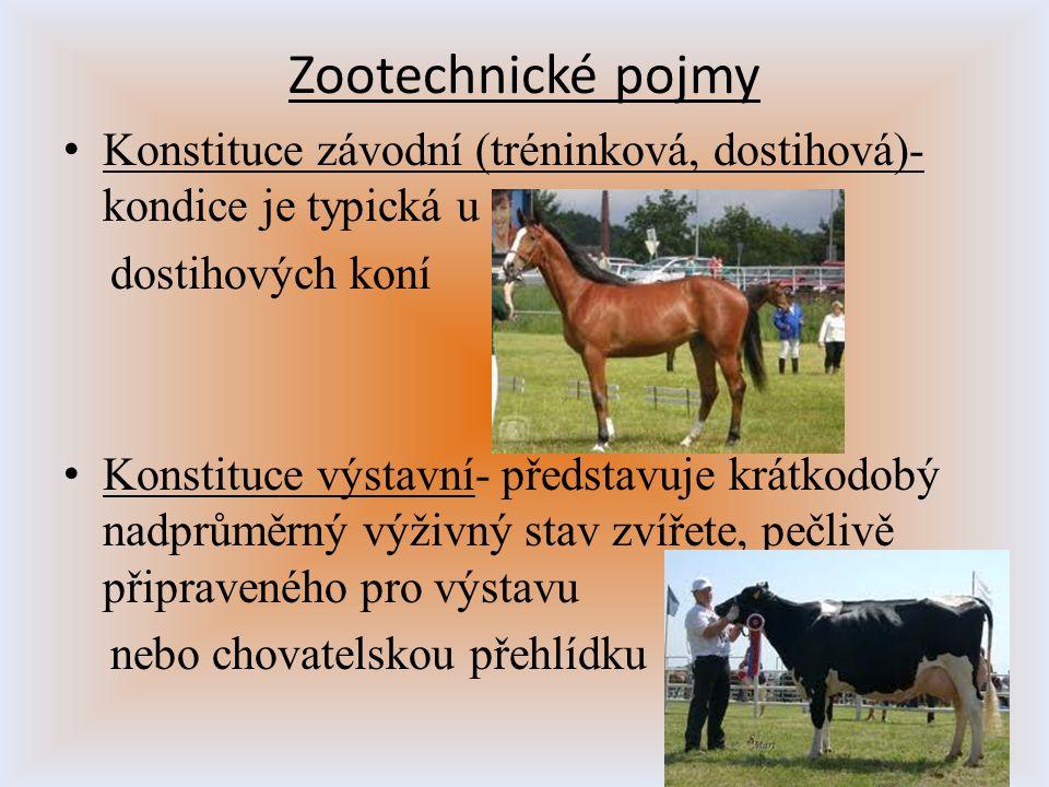 Zootechnické pojmy Konstituce závodní (tréninková, dostihová)- kondice je typická u. dostihových koní.