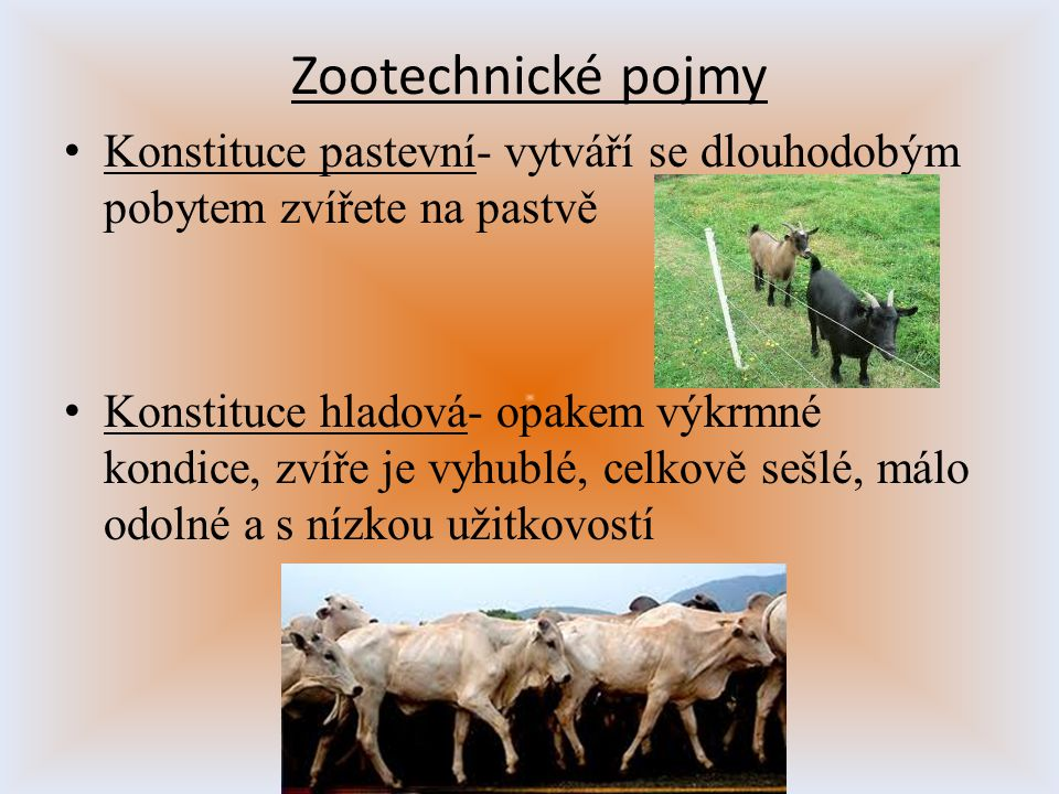 Zootechnické pojmy Konstituce pastevní- vytváří se dlouhodobým pobytem zvířete na pastvě.