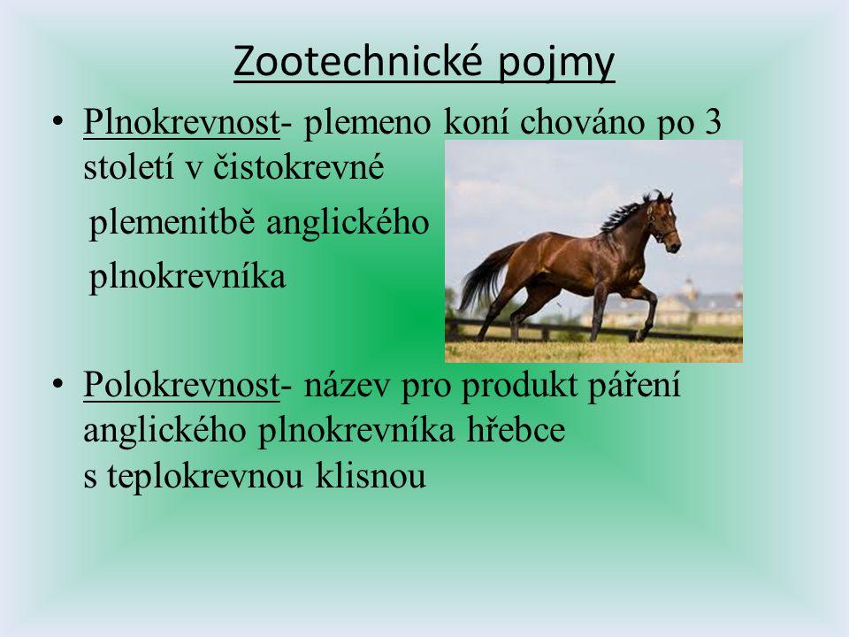 Zootechnické pojmy Plnokrevnost- plemeno koní chováno po 3 století v čistokrevné. plemenitbě anglického.