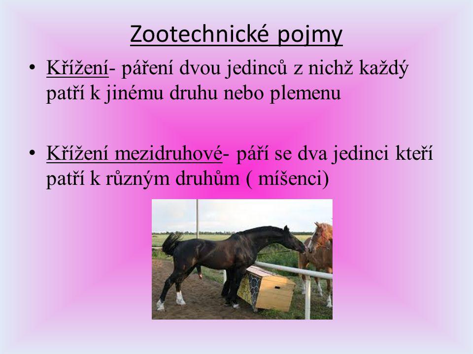 Zootechnické pojmy Křížení- páření dvou jedinců z nichž každý patří k jinému druhu nebo plemenu.
