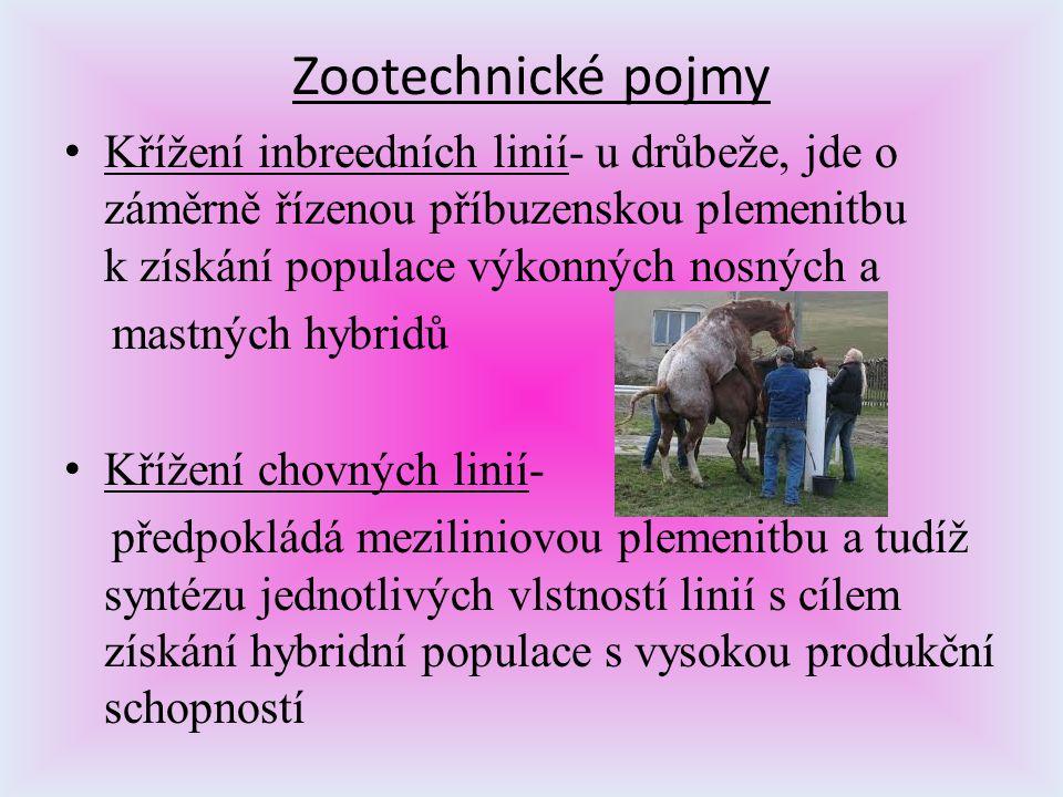Zootechnické pojmy Křížení inbreedních linií- u drůbeže, jde o záměrně řízenou příbuzenskou plemenitbu k získání populace výkonných nosných a.