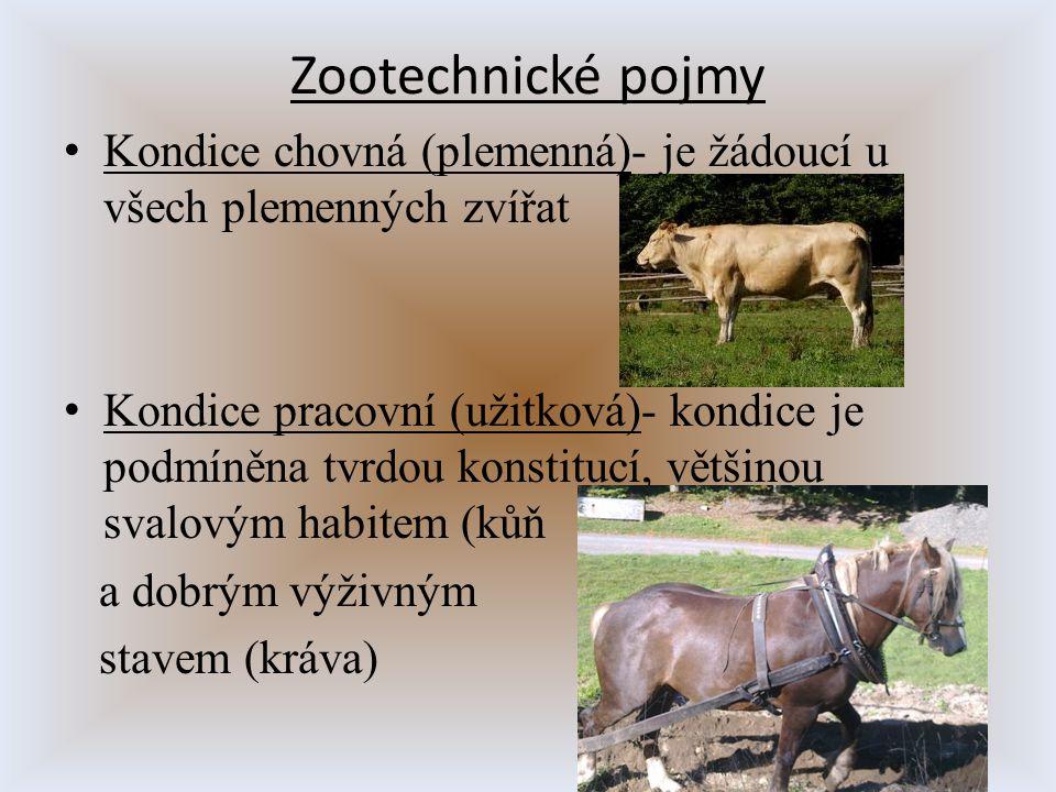 Zootechnické pojmy Kondice chovná (plemenná)- je žádoucí u všech plemenných zvířat.