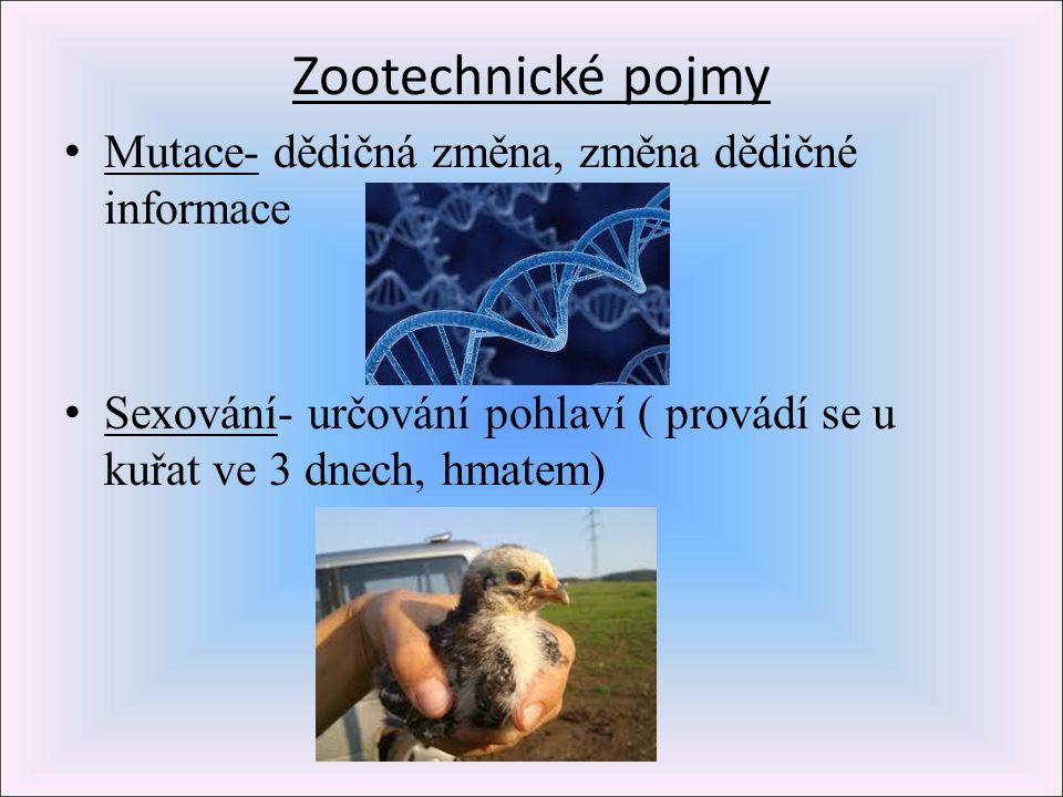 Zootechnické pojmy Mutace- dědičná změna, změna dědičné informace