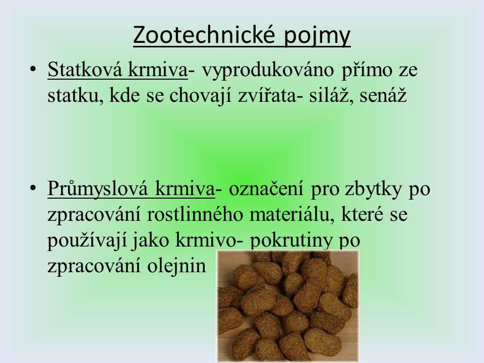 Zootechnické pojmy Statková krmiva- vyprodukováno přímo ze statku, kde se chovají zvířata- siláž, senáž.