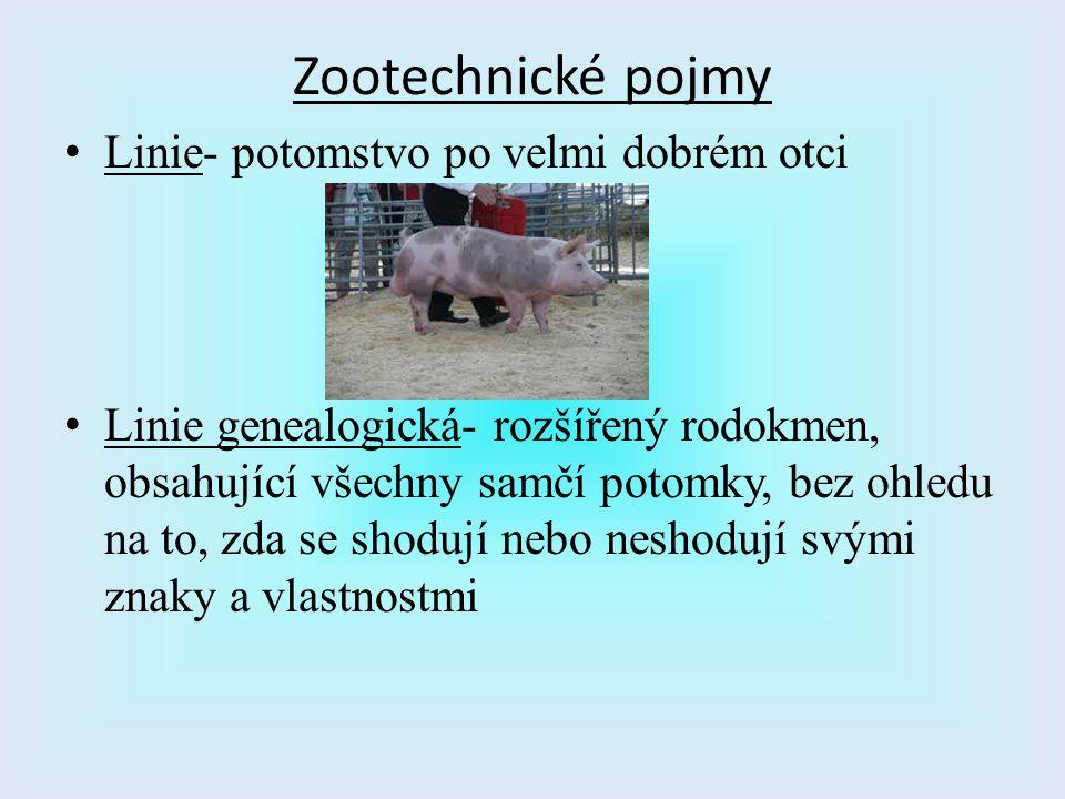Zootechnické pojmy Linie- potomstvo po velmi dobrém otci