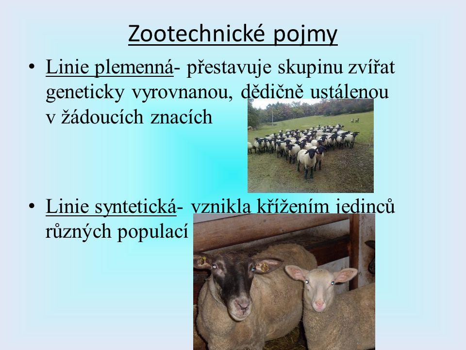Zootechnické pojmy Linie plemenná- přestavuje skupinu zvířat geneticky vyrovnanou, dědičně ustálenou v žádoucích znacích.