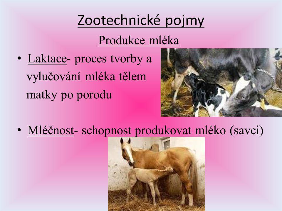 Zootechnické pojmy Produkce mléka Laktace- proces tvorby a