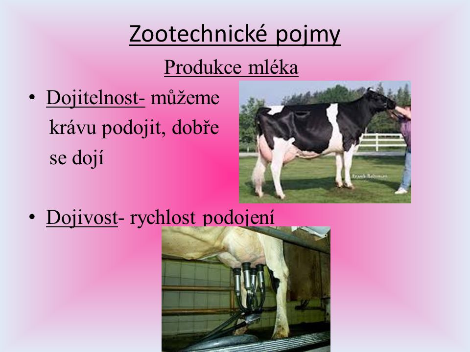Zootechnické pojmy Produkce mléka Dojitelnost- můžeme