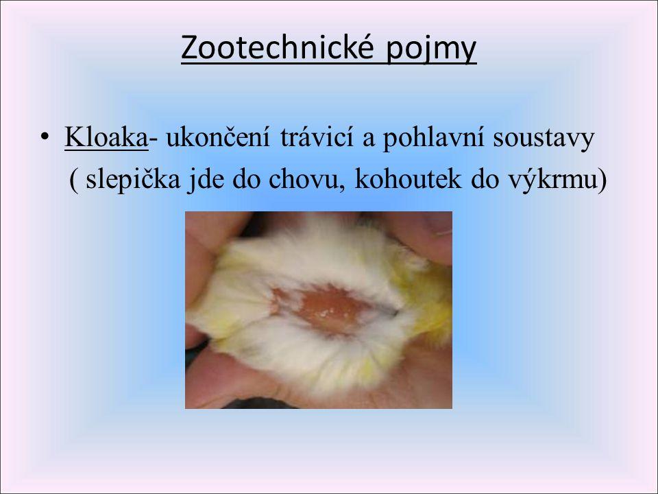Zootechnické pojmy Kloaka- ukončení trávicí a pohlavní soustavy