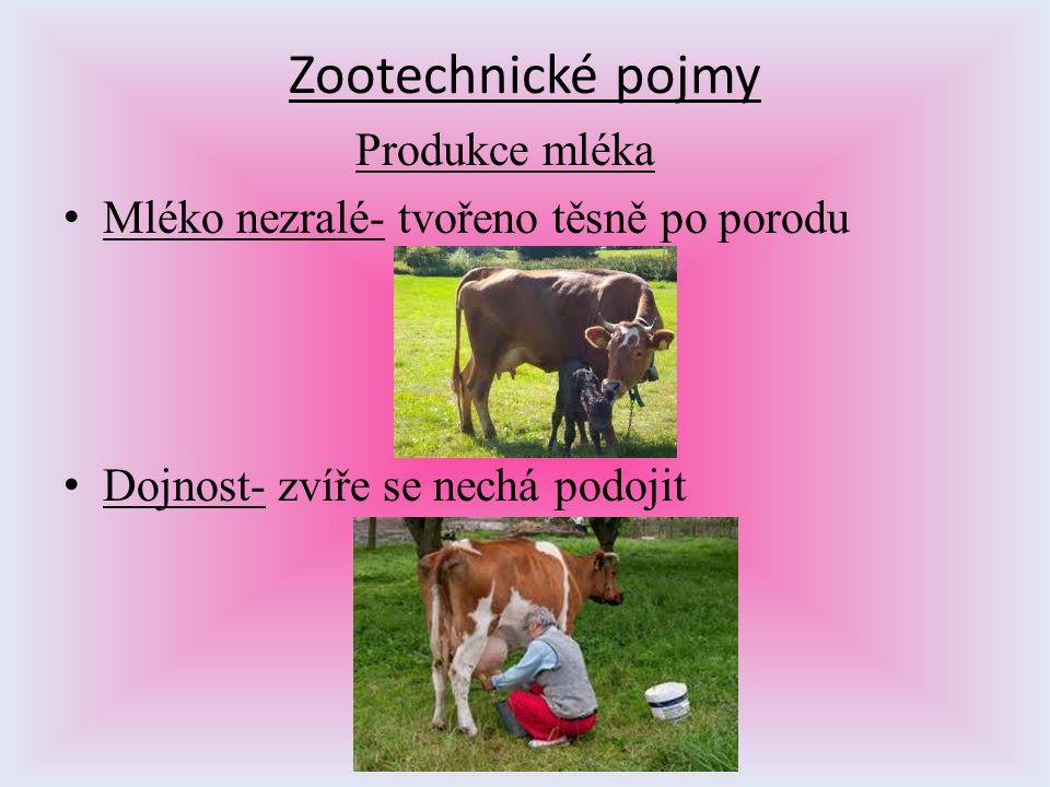 Zootechnické pojmy Produkce mléka