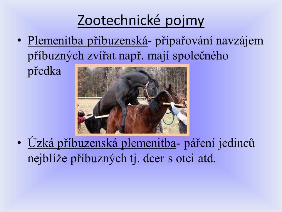 Zootechnické pojmy Plemenitba příbuzenská- připařování navzájem příbuzných zvířat např. mají společného předka.