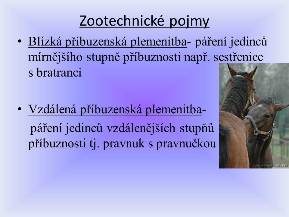 Zootechnické pojmy Blízká příbuzenská plemenitba- páření jedinců mírnějšího stupně příbuznosti např. sestřenice s bratranci.