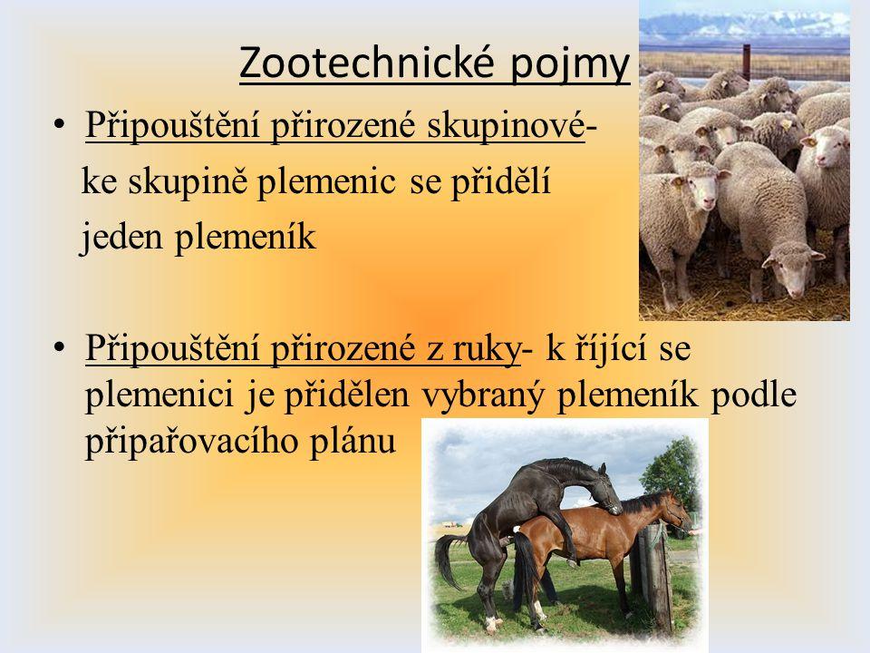 Zootechnické pojmy Připouštění přirozené skupinové-