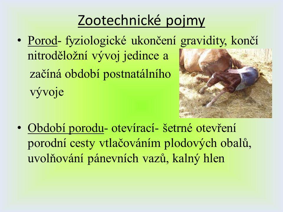 Zootechnické pojmy Porod- fyziologické ukončení gravidity, končí nitroděložní vývoj jedince a. začíná období postnatálního.