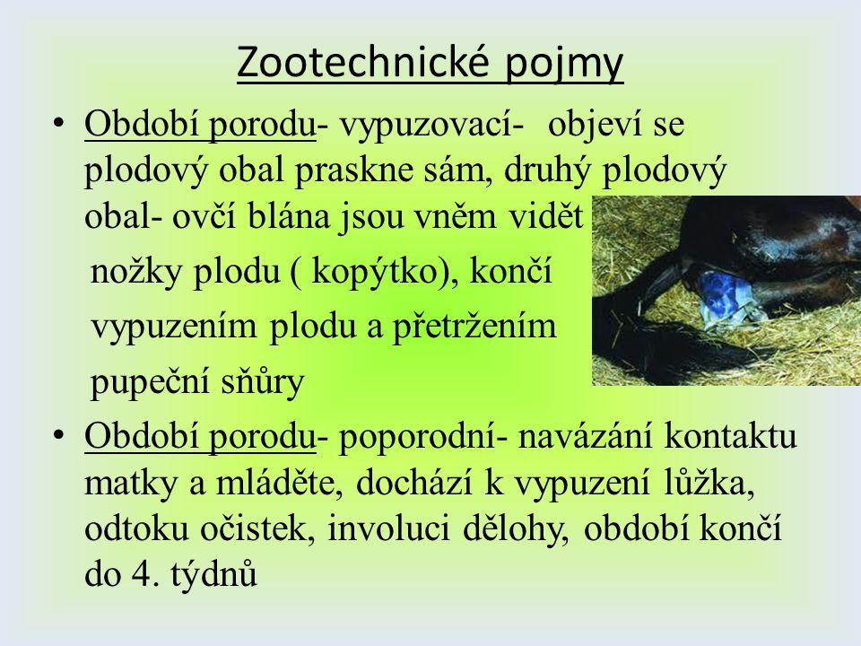 Zootechnické pojmy Období porodu- vypuzovací- objeví se plodový obal praskne sám, druhý plodový obal- ovčí blána jsou vněm vidět.
