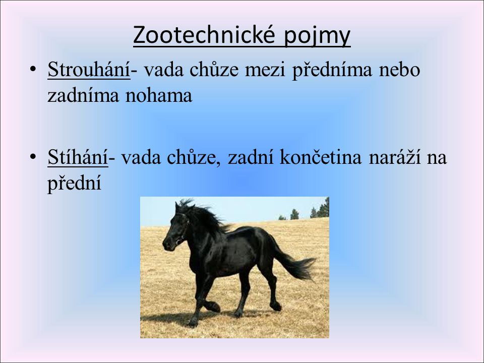Zootechnické pojmy Strouhání- vada chůze mezi předníma nebo zadníma nohama.