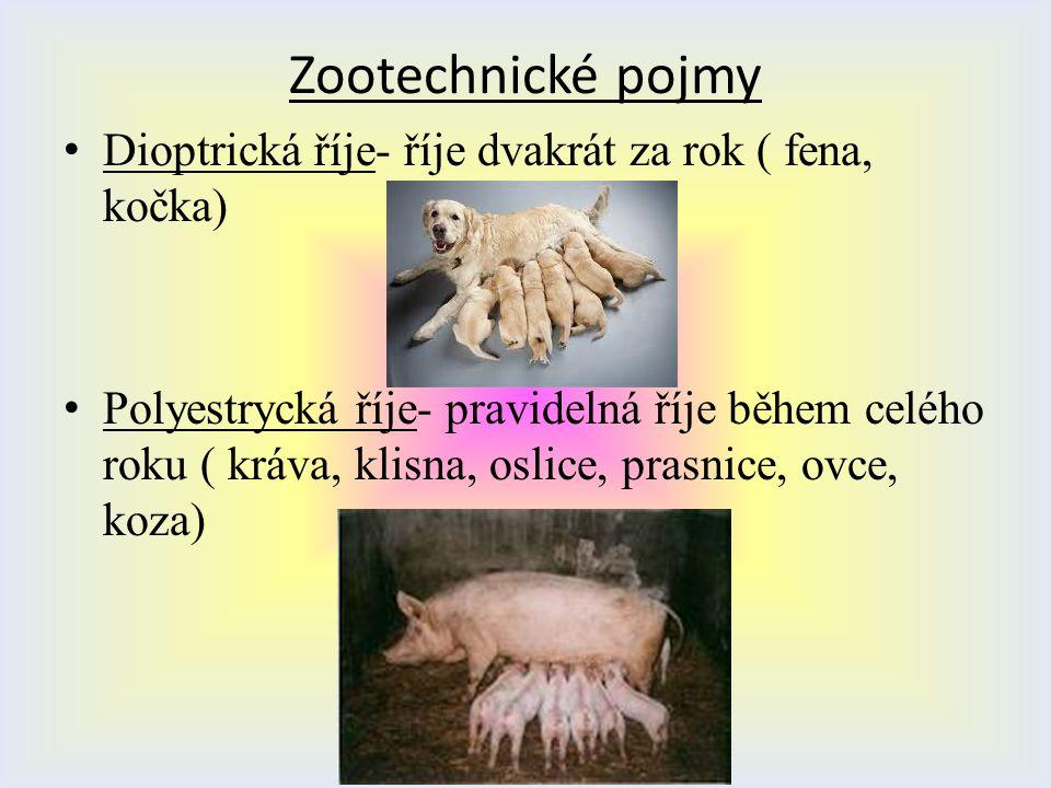 Zootechnické pojmy Dioptrická říje- říje dvakrát za rok ( fena, kočka)